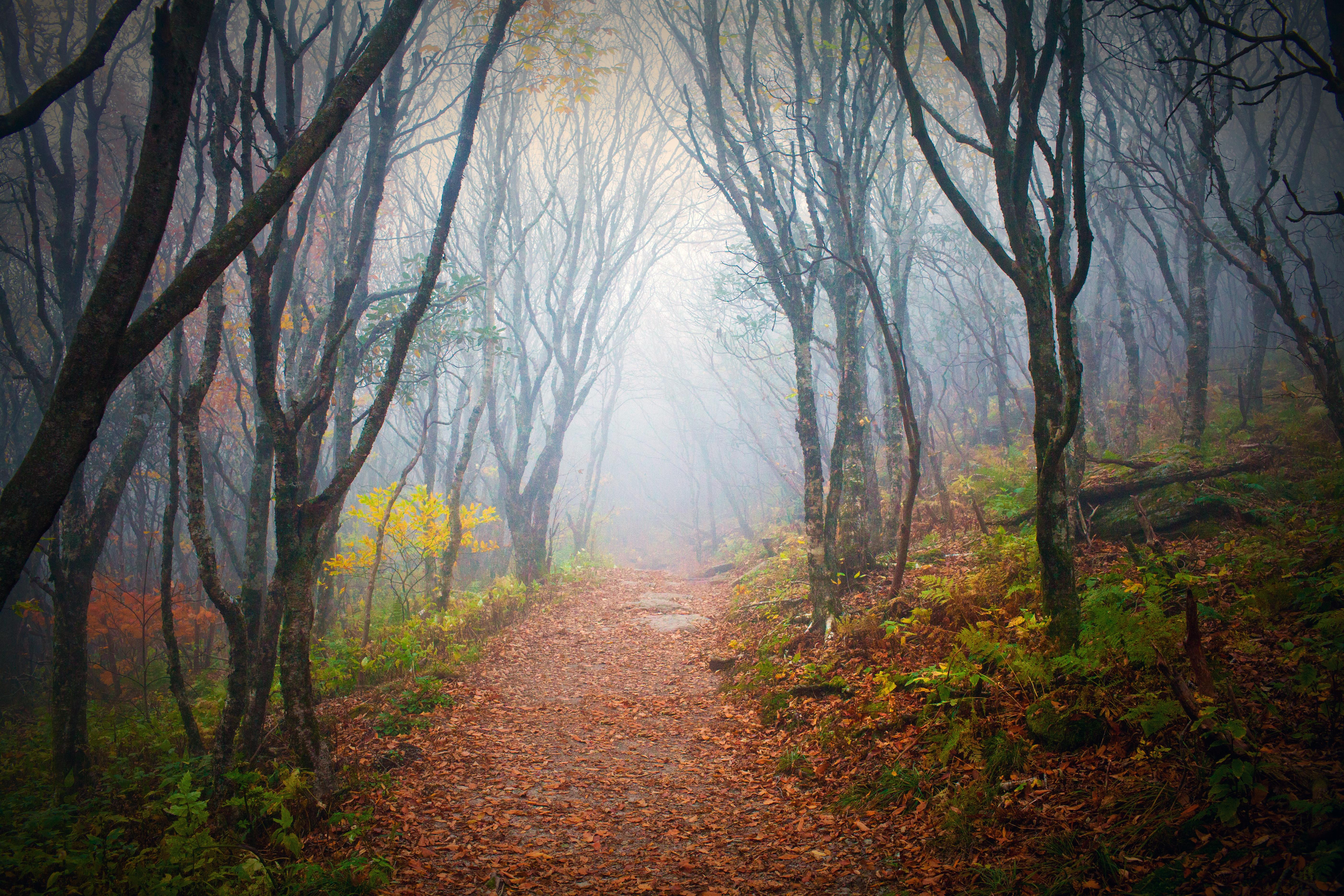 20609_Dark_Forest
